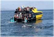 Купание с дельфинами в Заливе островов