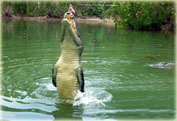 Экскурсия круиз Прыгающий крокодил