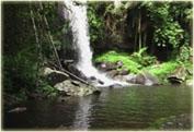 По тропическому лесу