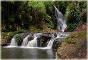 Сафари на джипе по тропическому лесу – окно в тропический лес