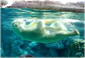 Парк Морской мир